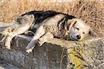 Sad old homeless hungry dog sleeping in the city suburbs.