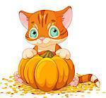 Cute little kitten holding giant pumpkin