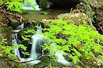 Mountain stream and green leaves, Saitama Prefecture