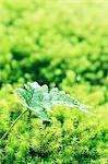 Fern leaf and moss