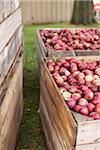 Crates of Apples at Farm, Milton, Ontario, Canada