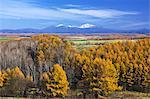 Mt.Asahi and larch forest, Hokkaido