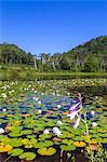 Swamp, Nagano Prefecture