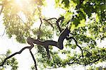 Low angle backlit detail of oak tree