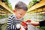 Joy of harvesting