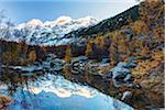 Piz Bernina Reflected in Pond at Sunrise, Val Morteratsch, Canton of Graubunden, Switzerland