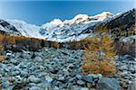 Rocky Ground with Piz Bernina in the background in Autumn, Val Morteratsch, Canton of Graubunden, Switzerland