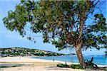 Scenic view of beach in Porticcio, Gulf of Ajaccio, Corsica, France