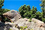 Tete du Chien rock (Dog's head rock), Calanques de Piana, Gulf of Porto, Corsica, France