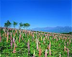 Nasu Flower World, Tochigi, Japan
