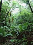Forest Of Yanbaru, Okinawa, Japan