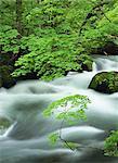 Oirase River, Aomori, Japan