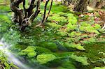 Shishigahana Marsh, Akita, Japan