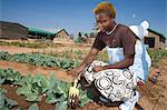 African woman tending to vegetable garden, sustainable development project, Dennilton