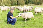 Senior farmer on pasture, Smaland, Sweden