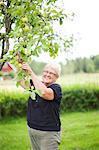Smiling senior woman picking apples