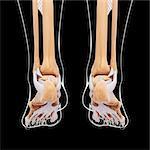 Human foot bones, computer artwork.