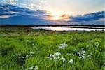 beautiful sunset over flowering green meadow, Drenthe, Netherlands
