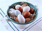New laid Eggs