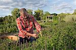 Mature man working on herb farm