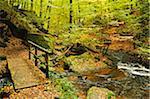 Karlstal Gorge, near Trippstadt, Palatinate Forest, Rhineland-Palatinate, Germany