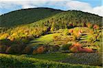 Vineyard Landscape, near Neustadt, German Wine Route, Rhineland-Palatinate, Germany