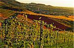 Vineyard Landscape and Buhlertal Village, Ortenau, Baden Wine Route, Baden-Wurttemberg, Germany