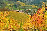 Vineyard Landscape and Ringelbach Village, Ortenau, Baden Wine Route, Baden-Wurttemberg, Germany