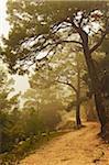 Mountain road at Profitis Ilias, Rhodes, Dodecanese, Aegean Sea, Greece, Europe
