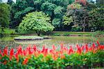 Kandy Royal Botanical Gardens at Peradeniya, Kandy, Sri Lanka, Asia