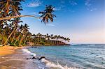 Palm tree on Mirissa Beach, South Coast, Southern Province, Sri Lanka, Asia