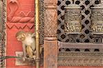 Rhesus Macaque monkey baby on ancient shrine, Swayambhunath Stupa (Monkey Temple), UNESCO World Heritage Site, Kathmandu,  Nepal, Asia