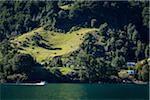Shoreline view, Lake Todos los Santos, Parque Nacional Vicente Perez Rosales, Patagonia, Chile