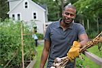 A man in gloves harvesting garlic bulbs in the vegetable garden.