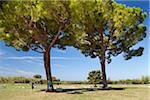 Tourists under Trees, Paestum, Campania, Italy