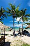 Palm trees and Lamai Beach, Koh Samui, Thailand, Southeast Asia, Asia