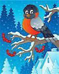 Winter bird theme image 1 - eps10 vector illustration.