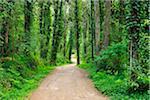 Forest Path in Spring, Parque Natural de Sintra-Cascais, Lisboa, Portugal