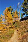 Path through Larch Forest in Autumn, Riffelalp, Zermatt, Alps, Valais, Switzerland