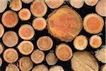 Stack of Spruce Logs, Odenwald, Hesse, Germany