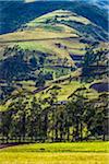 Farmland, Zuleta, Imbabura Province, Ecuador