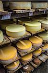 Cheese Factory at Hacienda Zuleta, Imbabura Province, Ecuador