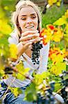 Grape harvest, Young woman picking grapes, Slavonia, Croatia