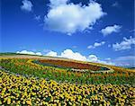 Hinode Park, Hokkaido, Japan