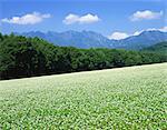 Togakushi Highland, Nagano, Japan