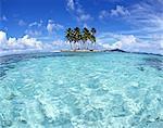 Island Of Palm