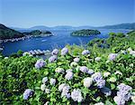 Ine Bay, Kyoto, Japan