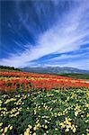 Mt. Nasu From Nasu Flower World, Tochigi, Japan