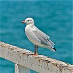 A seagull at the beach