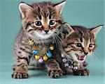 Little kittens with small metal jingle bells beads . Studio shot.